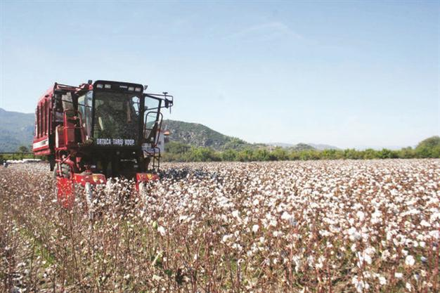 TURKEY'S COTTON PRODUCTION IS DECLINING